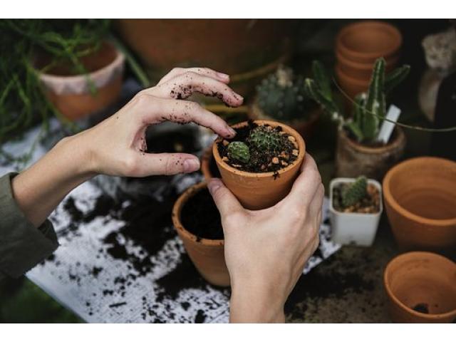 Jardiner éco responsable