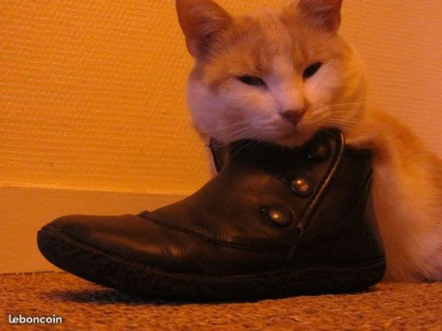Catsitter, garde animaux