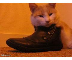 Catsitter, garde animaux - Rennes (35)