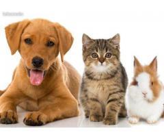 Garde d'animaux et babysitting - Saint-Avertin (37550)