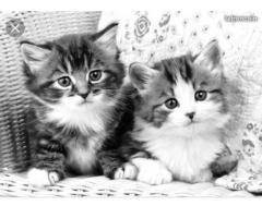 Pet sitter pour garder vos compagnons - Brignais (69530)