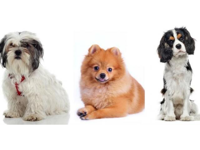 Recherche H/F pour garder mes chiens à mon domicile