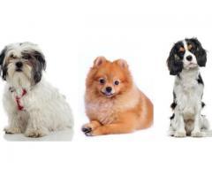 Recherche H/F pour garder mes chiens à mon domicile - Mandelieu-la-Napoule (06210)