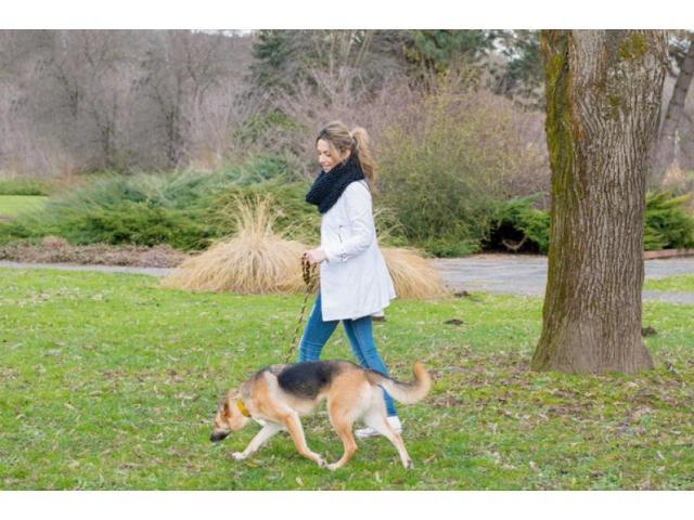 Promenades de vos chiens
