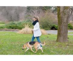 Promenades de vos chiens - Crémieu (38460)