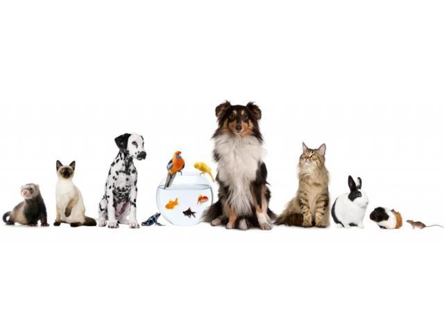 Garde de chien, chat et autres compagnons
