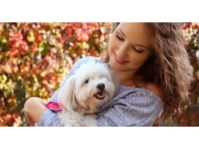 Toilettage pour chiens à votre domicile