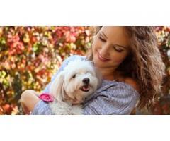 Toilettage pour chiens à votre domicile - La Chapelle-Réanville (27950)