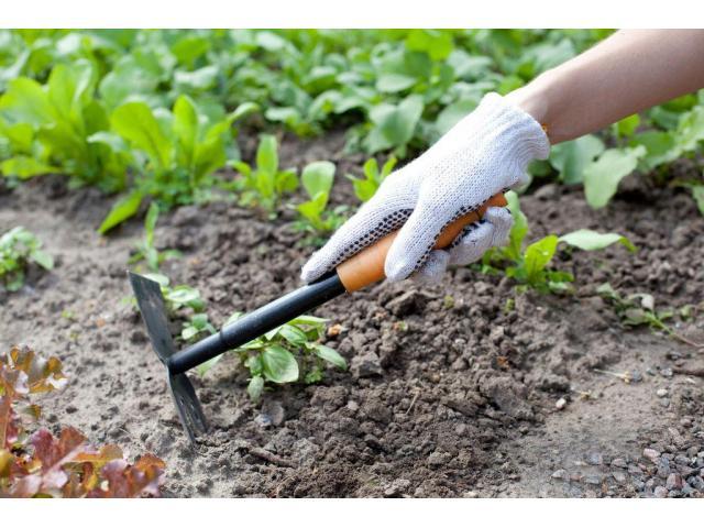 Jeune jardinier expérimenté