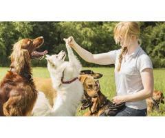 Garde de mon chien - Fleurance (32500)