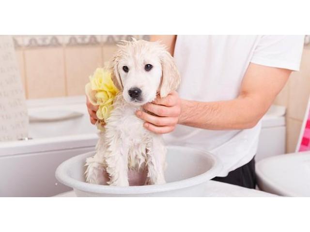 Toilettage de chiens à domicile