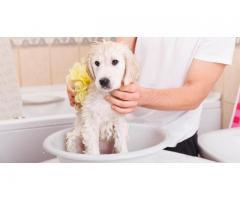 Toilettage de chiens à domicile - Hérouvillette (14850)