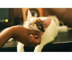 Garde de chats - Gentilly (94250)