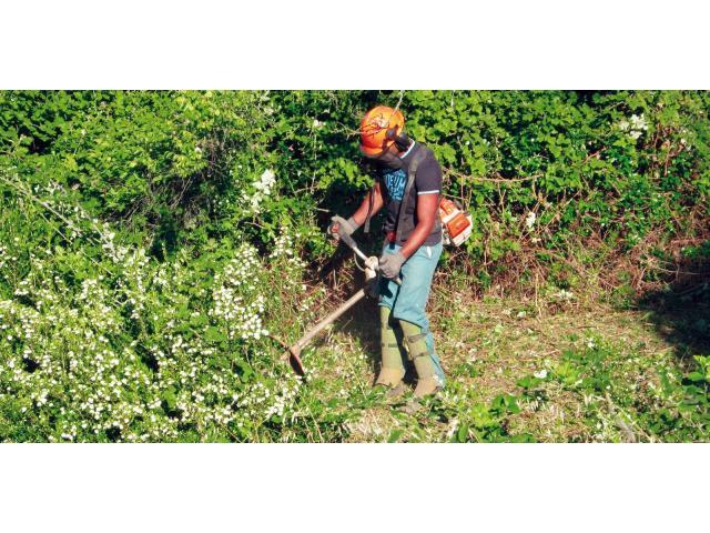 Travaux de tonte débroussaille plantes piquet bois