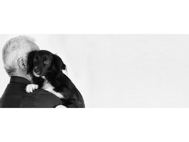 Jeune retraité garde votre chien