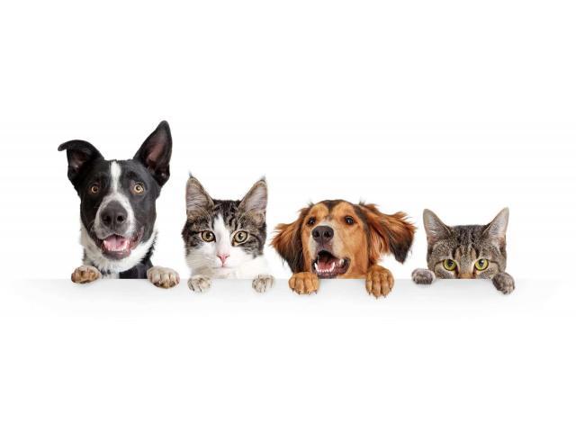 Garde d'animaux recherché