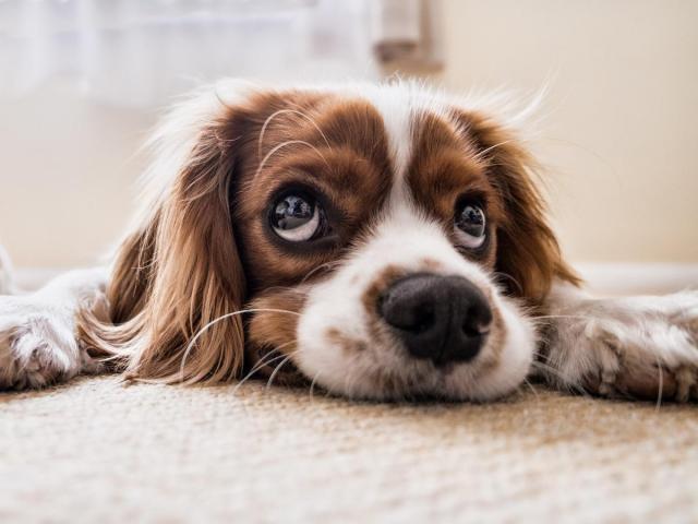 Garde de chien et promenades