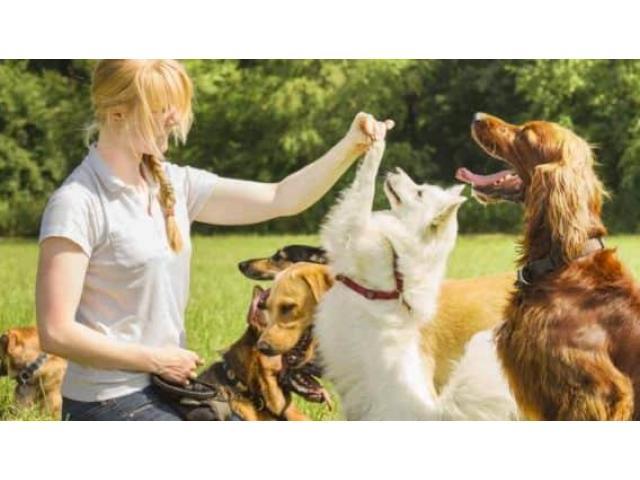 Retraité garde votre chien