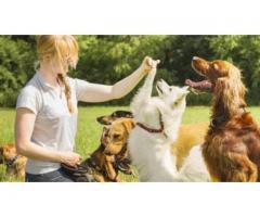Retraité garde votre chien - Buxerolles (86180)
