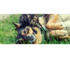 Garde de vos animaux de compagnie - Crémieu (38460)