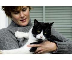 Garde de votre chat - Conflans-Sainte-Honorine (78700)