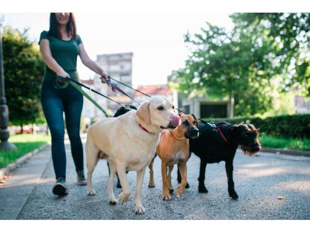 Pension canine et féline tout confort