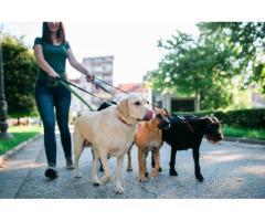 Pension canine et féline tout confort - Fougères (35300)