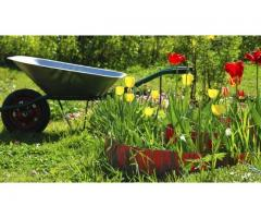 Jeune homme propose des services de jardinage à Metz (57050)