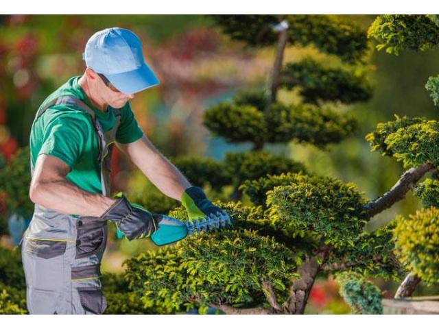 Jeune jardinier pour votre espace vert