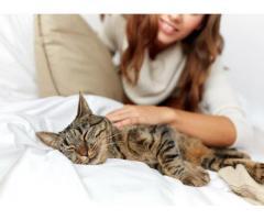 Couple vous garde vos chats - Paris (75014)