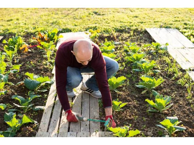 Aide jardinier recherché