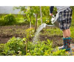 Entretien jardins et espaces verts à Lorient (56100)
