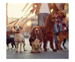 Nounou pour chiens à Draguignan (83300)