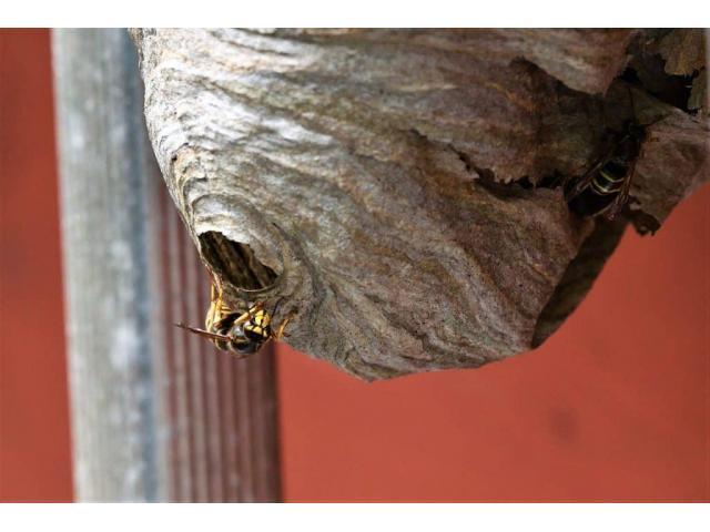Problème de nids d'abeilles/frelons?