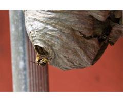 Problème de nids d'abeilles/frelons? à Metz (57)