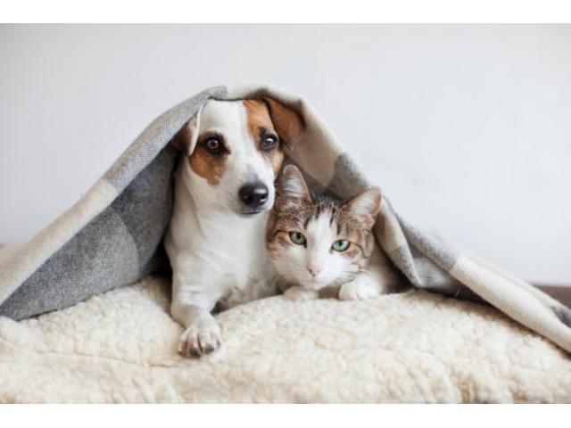 Garde de votre animal en votre absence