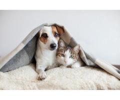Garde de votre animal en votre absence à Mondonville (31700)