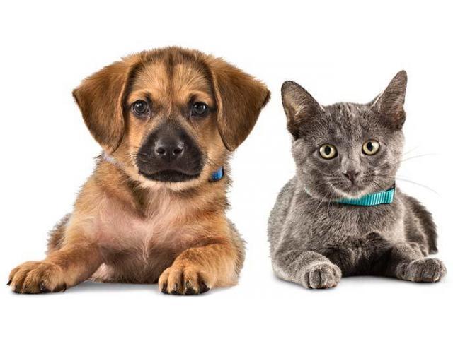 Petsitter chien, chat, oiseaux
