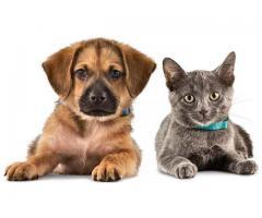 Petsitter chien, chat, oiseaux à Petite-Forêt (59494)