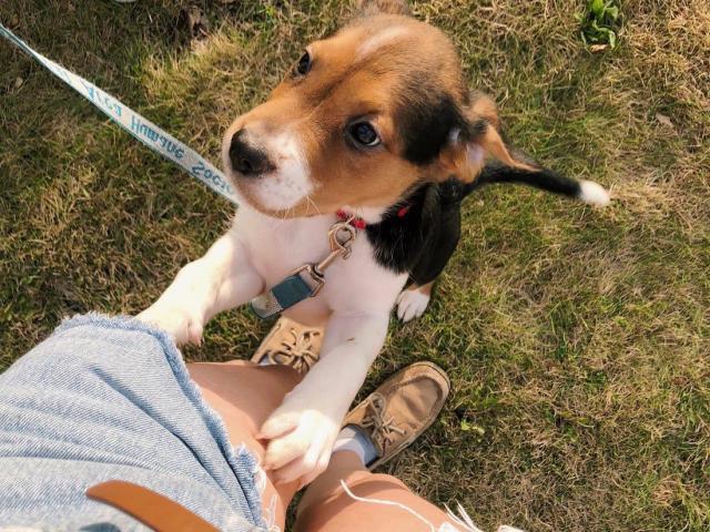 Pet sitter/ garde d'animaux
