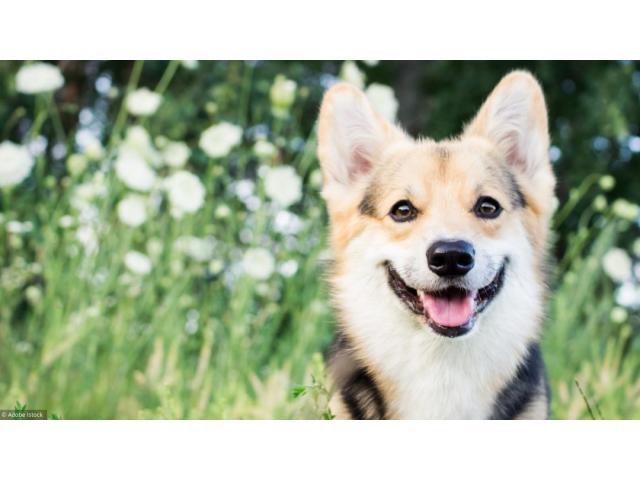 Garde de votre chien
