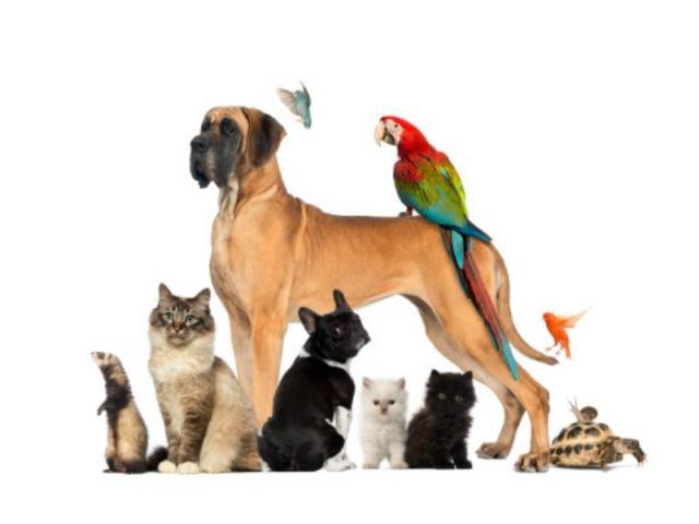 Promeneuse et soins de vos chiens