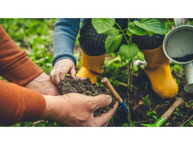 Entretien jardin et espaces verts